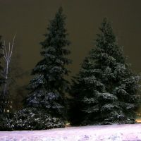 Зимний ночной Лысый парк 15.01.2010, Балаклея