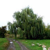 За деревом ставочек, Близнюки