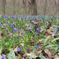 Весна в борках, Борки