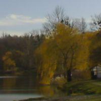 Golden November, Борки