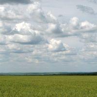 Украина, Борки