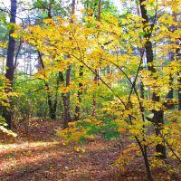 Золотая осень, Борки