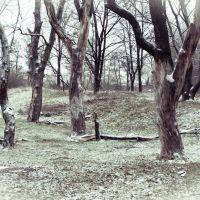Присипало, припорошило...  / Pour, newly-fallen snowed..., Боровая
