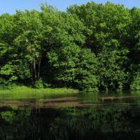 Pond, Буды