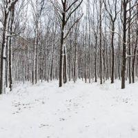 Зима в лесу, Буды
