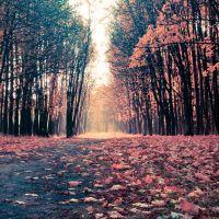Осень в лесу, Буды