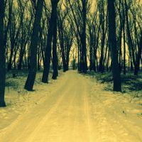 Лесная дорога, Волчанск