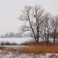 Зимнее озеро, Зидьки