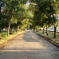 Утренняя аллея, Красноград