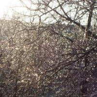 Хрустальная зима, Красноград