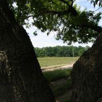 Дерево, Люботин