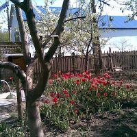 Цветущий Сад возле вокзала Новой Водолаги, Новая Водолага