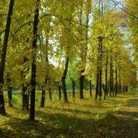 осень на ул. ЛенОна, Первомайский