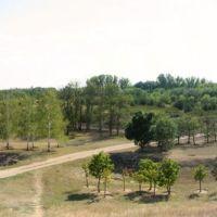 Аскания Нова - дендропарк, Аскания-Нова
