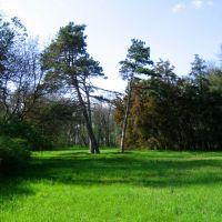Поляна в парке. Три сосны., Аскания-Нова