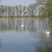 Swan lake - Лебединое озеро, Аскания-Нова