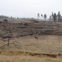 Цюрупинский лес после пожара, Великая Александровка
