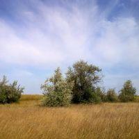 meadows, Великая Александровка