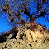 tree on a dune, Великая Александровка