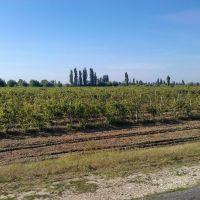Vineyard, Великая Александровка