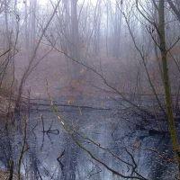 Foggy morning, Великая Александровка