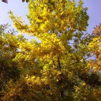 autumn tree, Голая Пристань