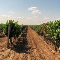 Виноградные параллели, Днепряны