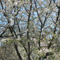Сады в цвету, Нижние Серогозы