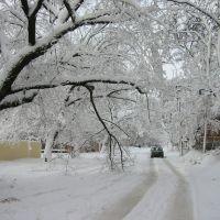 Зима, Херсон