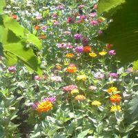 Цветы, Чаплинка