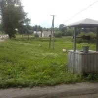 Криниця, Базалия