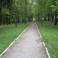 алея парку біля стадіону на весні, Виньковцы