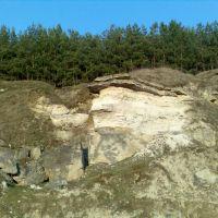 Сосни над скалою, Виньковцы