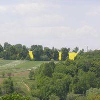 Жовте поле, Виньковцы