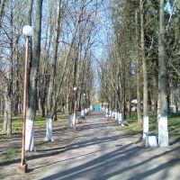 Весенний парк., Староконстантинов