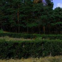 forest in town, Нетешин