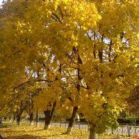 Деревья осенью, Ватутино
