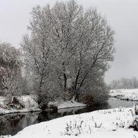 р. Торч., Жашков