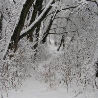 Зима, Жашков