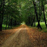 Дендропарк | Park Arboretum, Звенигородка