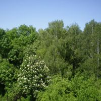 viwe from my Window, Золотоноша