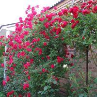 Цветы, Золотоноша
