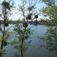 Центральний ставок (Central pond)., Маньковка
