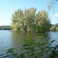 Острів на Центральному ставку. (Island on the Central pond.), Маньковка
