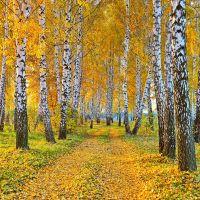 Золотая осень, Борзна
