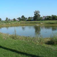 Lebediove boloto (swan marsh), Вертиевка