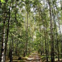 Birches, Замглай