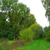 Небольшой островок ,сейчас заросший кустарником и старыми деревьями., Козелец