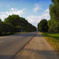 Дорога на Чернигов, Козелец