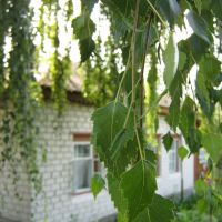 Береза и домик (Beautiful House and Leafes Of Birch), Короп